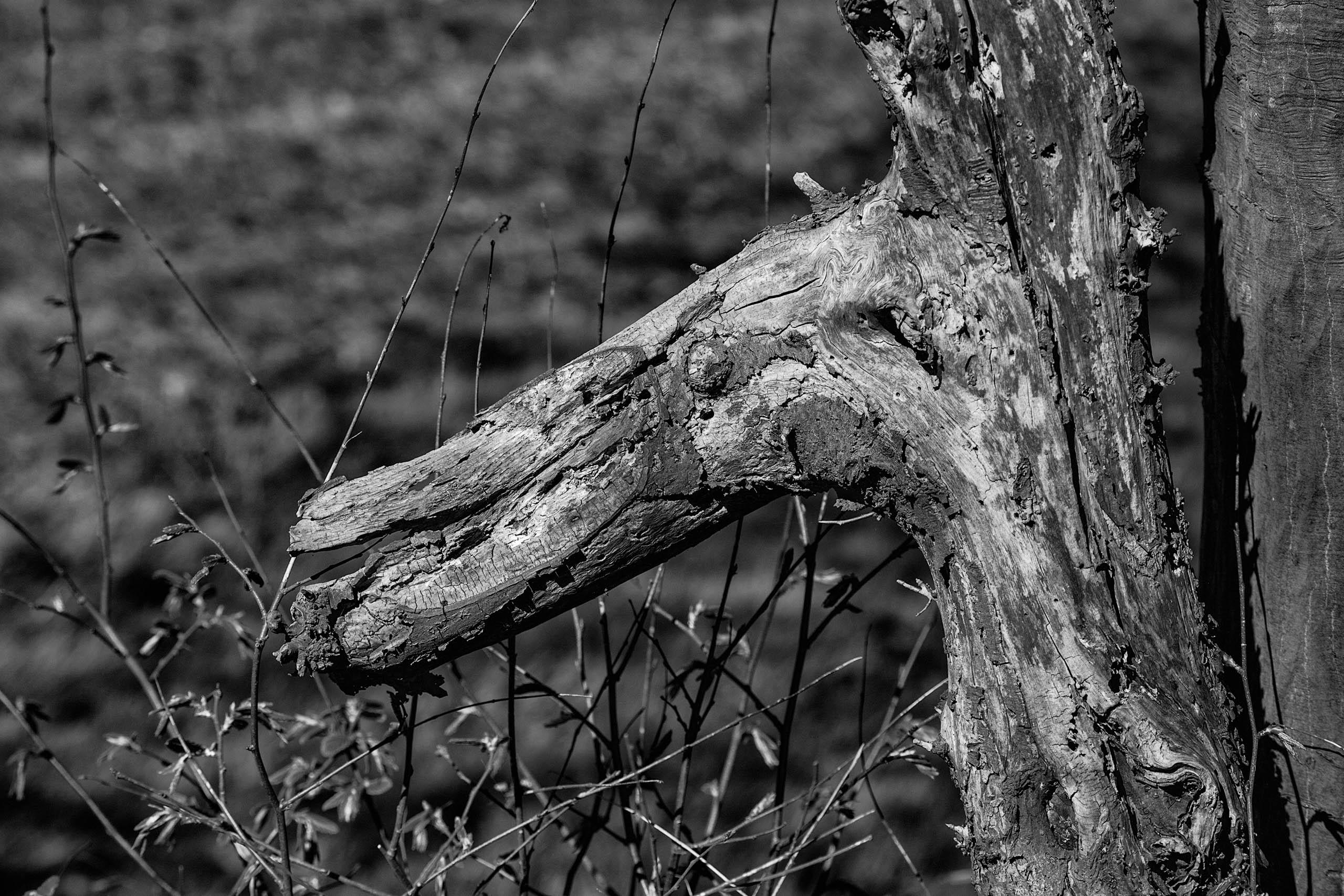 Holz in Form - ein Baum lebt ewig!